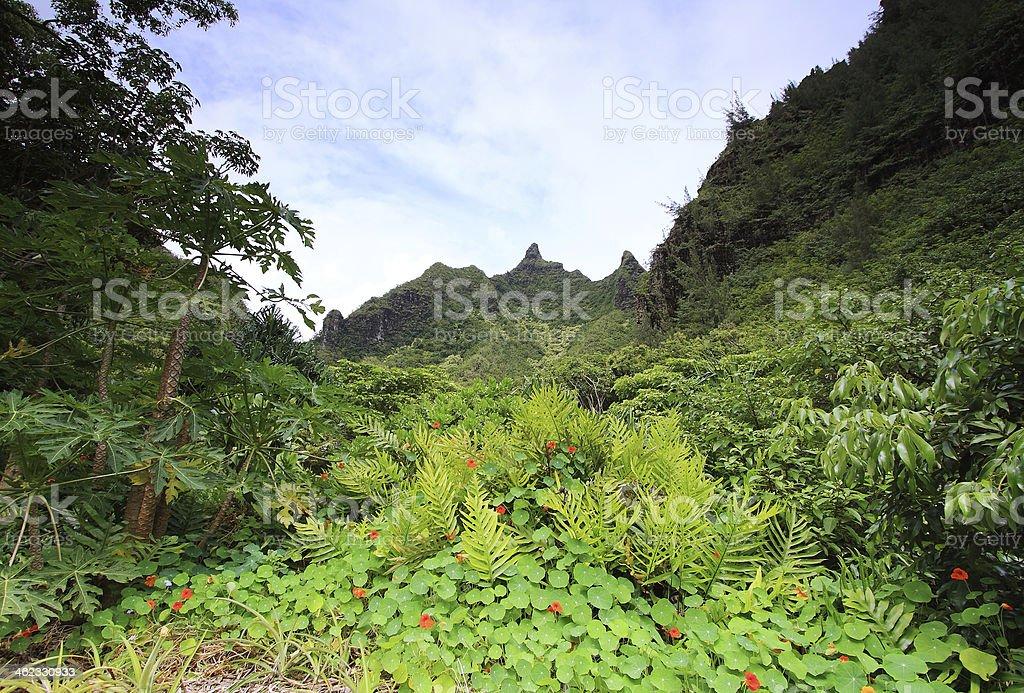 Views from Limahuli gardens, Kauai island stock photo