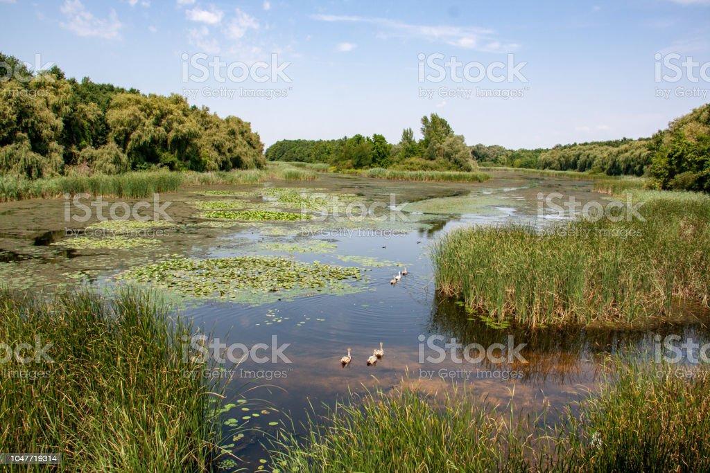 Views of Hungarian nature reserve Kis Balaton (Little Balaton) – zdjęcie