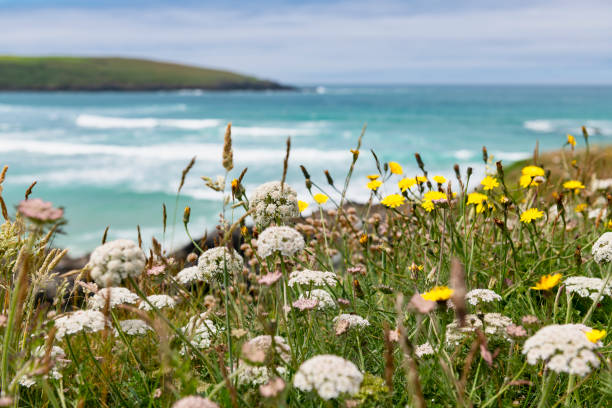 views over crantock beach, newquay, cornwall. - cornwall stock pictures, royalty-free photos & images