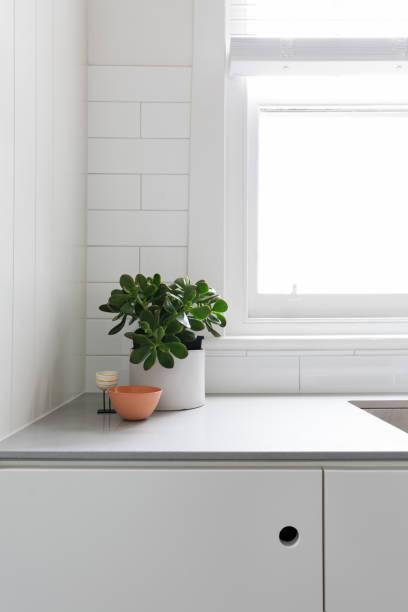 vignette von topfpflanze und ornamente auf eine küche benchtop - laminatschränke stock-fotos und bilder