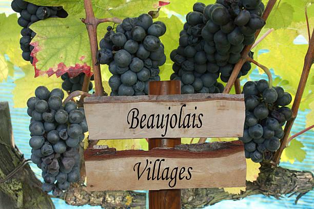 Cтоковое фото Vignoble Beaujolais villages