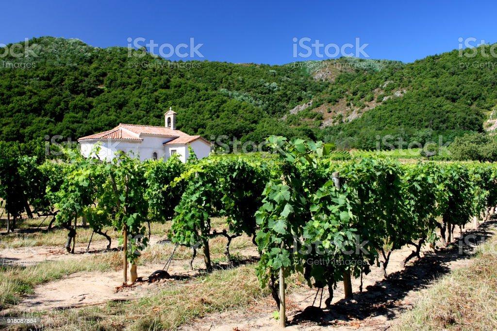 Vignoble Vallée du Rhône Côtes du Rhône Drôme Provence France - Photo