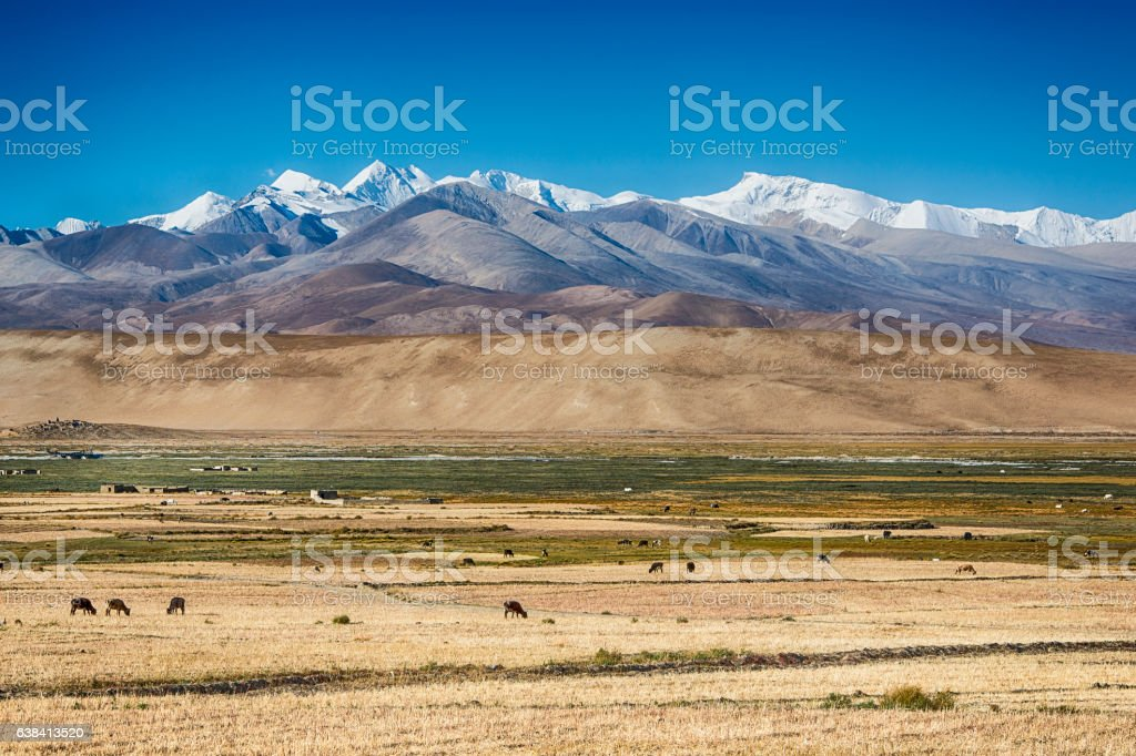 Village and grazing Yaks in Tibet in front of Himalayas stock photo