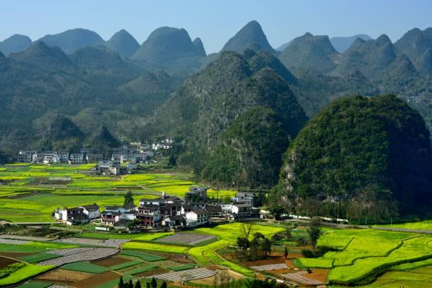 Dorf-und Ölsaaten von Rapsblumen Felder im Karstspuck Wald – Foto