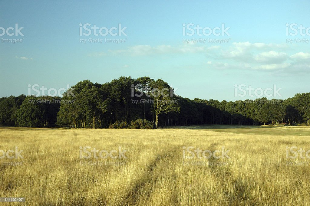 Village Common in Summertime royalty-free stock photo