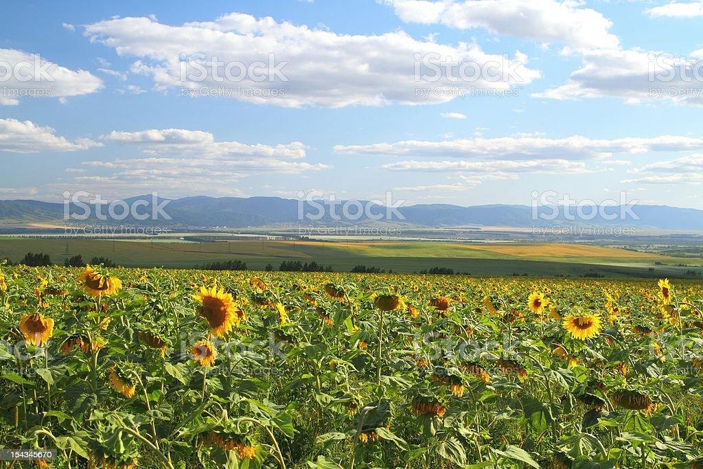Village landscape in Siberia stock photo