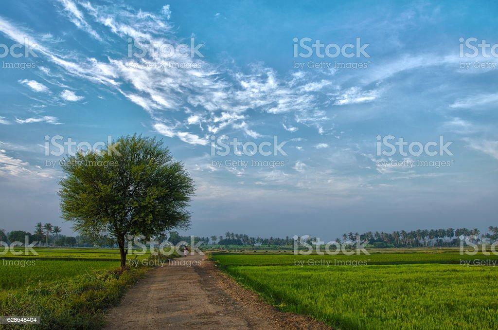 Village landscape stock photo