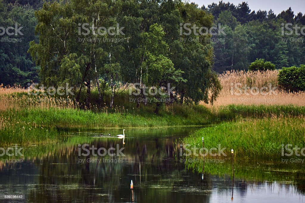 Village landscape with a swan floating on the pond royalty-free stock photo