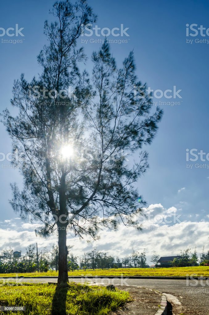 Village Morning Sunlight stock photo
