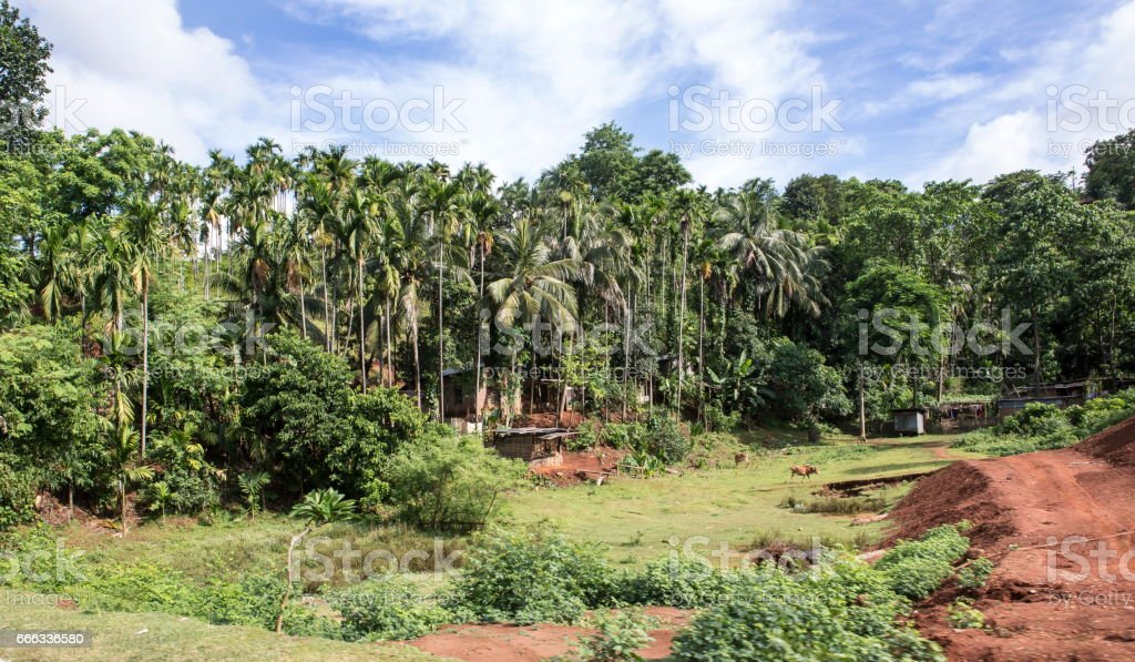 A village near Guwahati district in Assam  sarrounded with Coconut trees stock photo