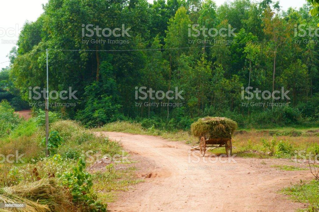 Village road in the rice harvest season stock photo