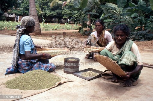 three women winnowing grain in a small un-named settlement just outside the city of Bangalore India June 20 1988 the women are sitting on the ground  in a poor rural Indian village
