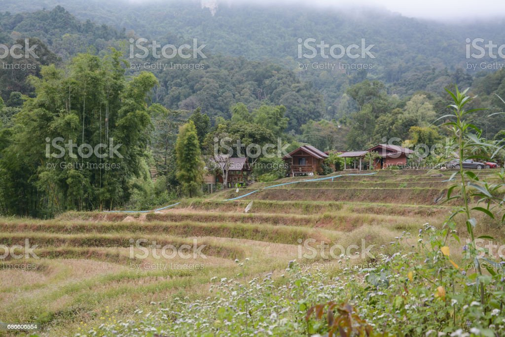 village with  rice terraces field in Mae Klang Luang , Mae Chaem, Chiang Mai, Thailand royalty-free stock photo