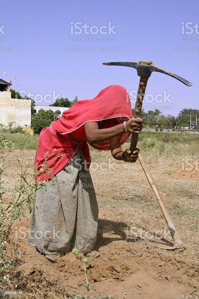 Village woman working in field, Rajasthan, India stock photo