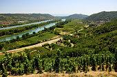 Paysage, vignoble et vigne de la Vallée du Rhône France 2017