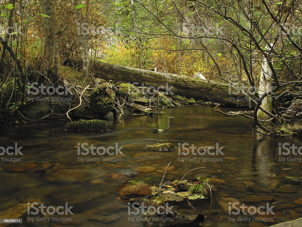 Vinal Creek In The Fall #4 royalty free stockfoto