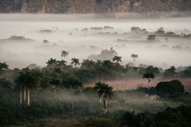 Vinales valley & las Terrazas (Cuba) stock photo