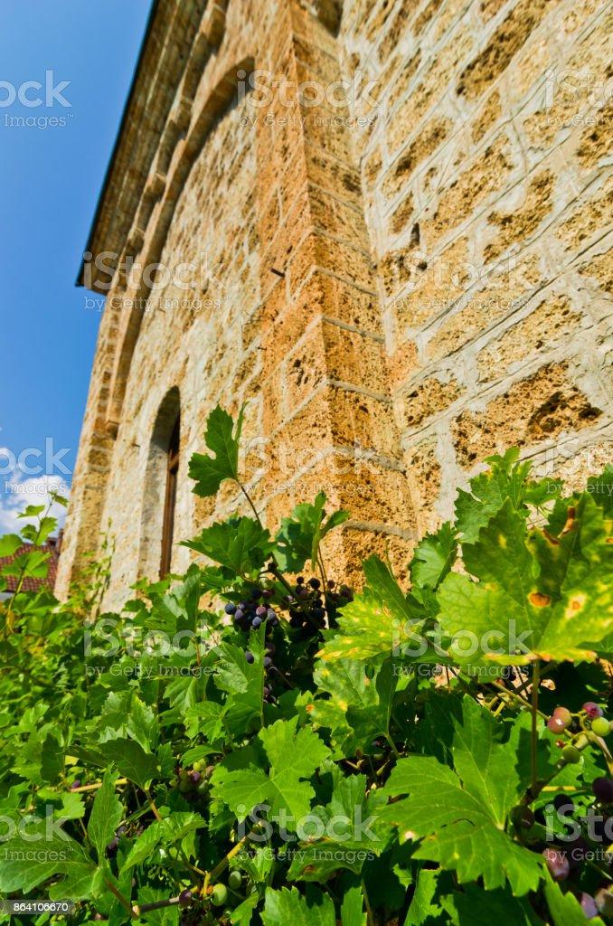 Vine around the wall of Raca monastery established in 13. century royalty-free stock photo
