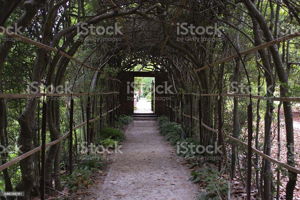 & Vine Canopy stock photo 486293281 | iStock