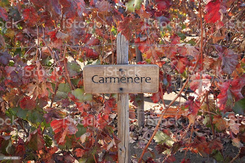 Vine - Carménère stock photo