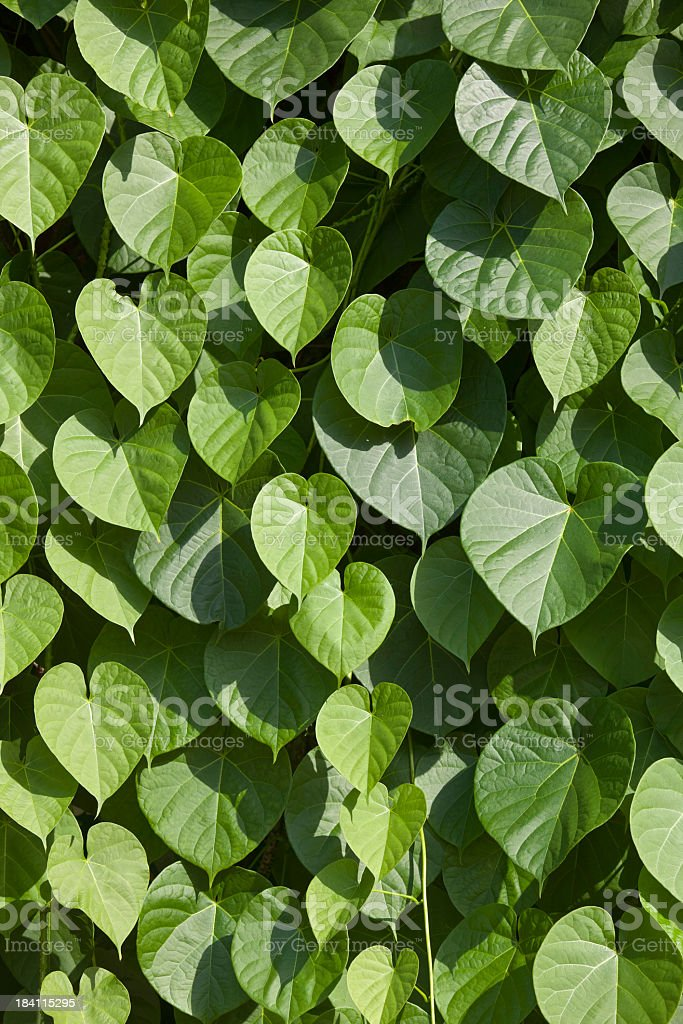 Vine leaf background. royalty-free stock photo