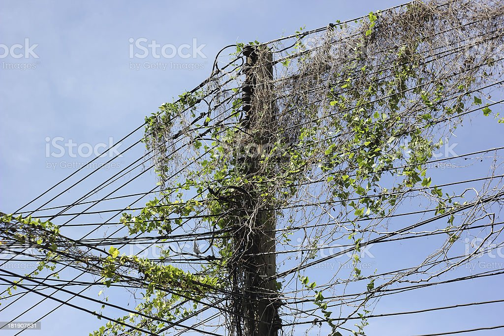 vine on the electrical pole royalty-free stock photo
