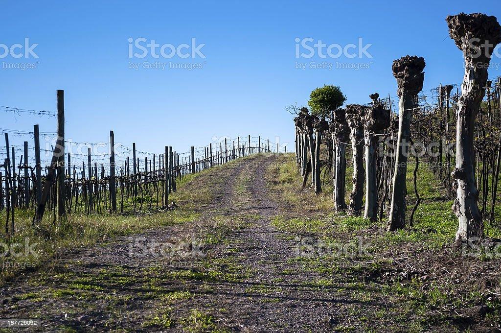 Vine Path royalty-free stock photo