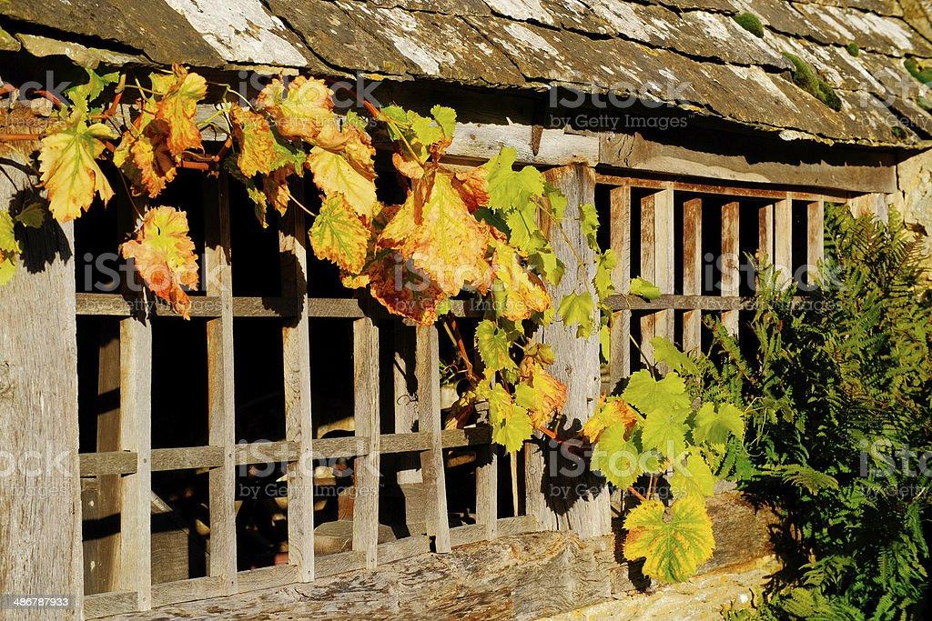 vine royalty-free stock photo