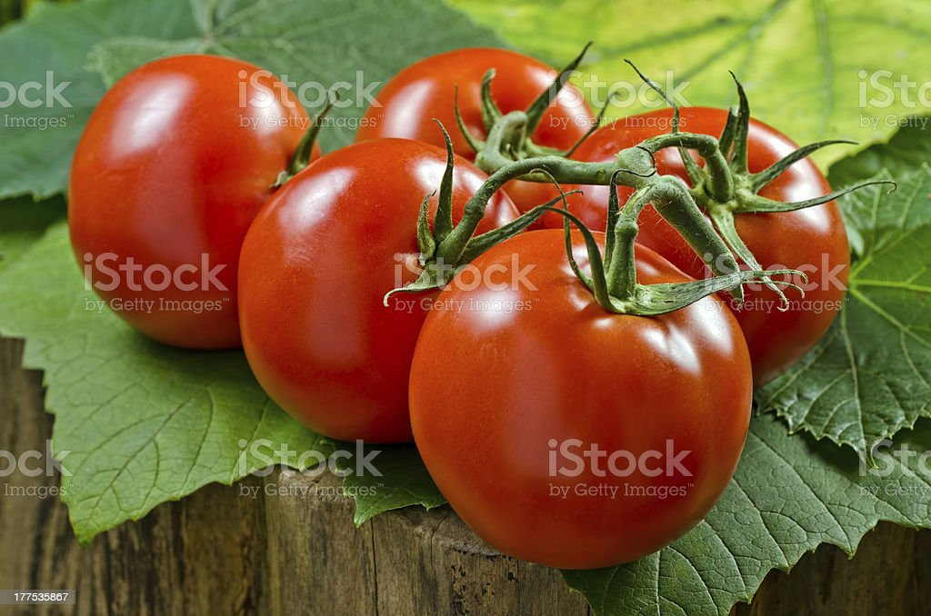 Vine Ripened Tomatoes royalty-free stock photo