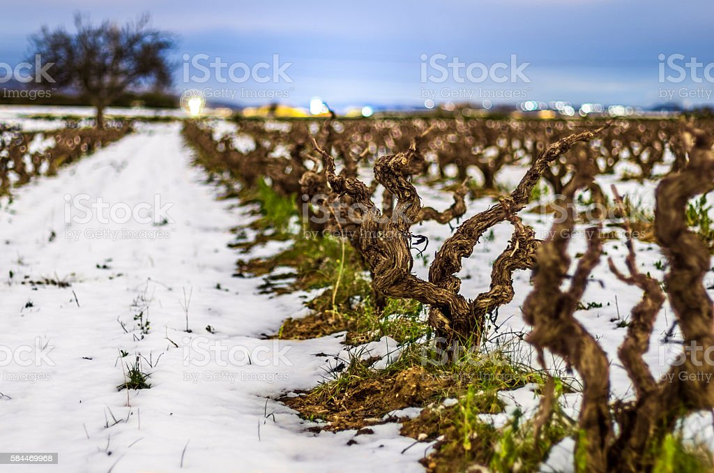vine vineyard night snow winter bokeh light flare stock photo