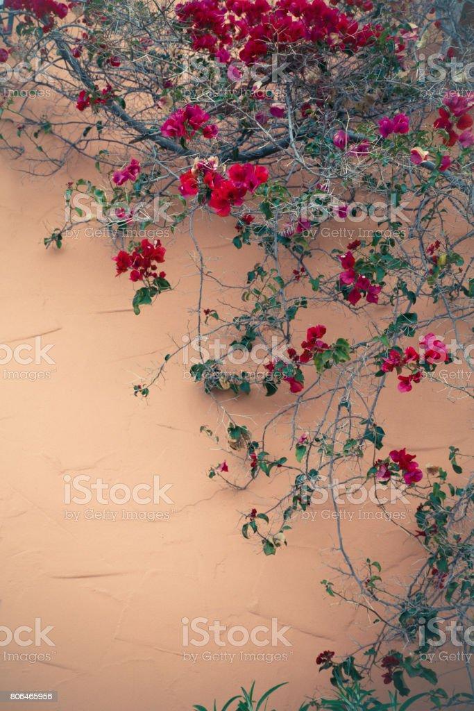 Ranke mit Blumen – Foto