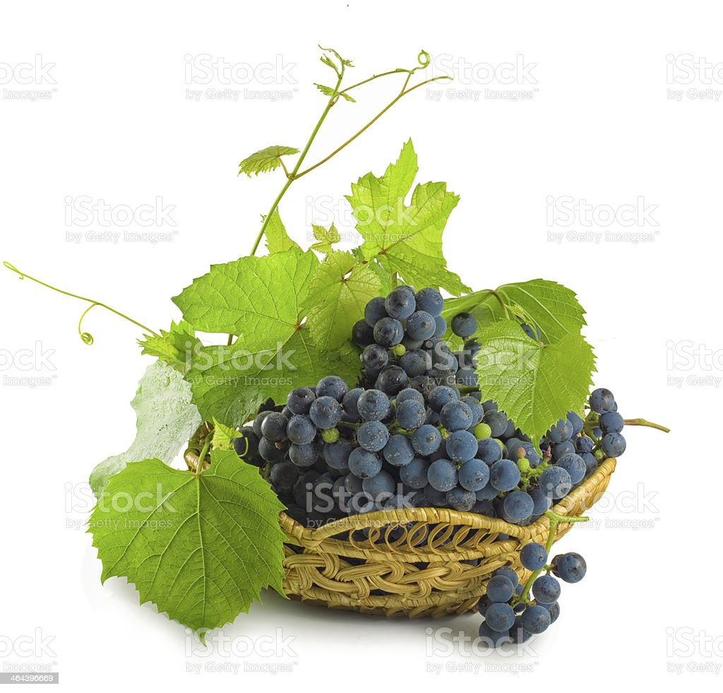 vine with leaves royalty-free stock photo