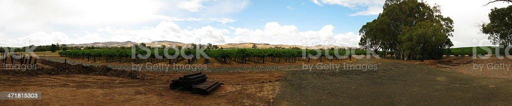 vine yard panorama royalty-free stock photo