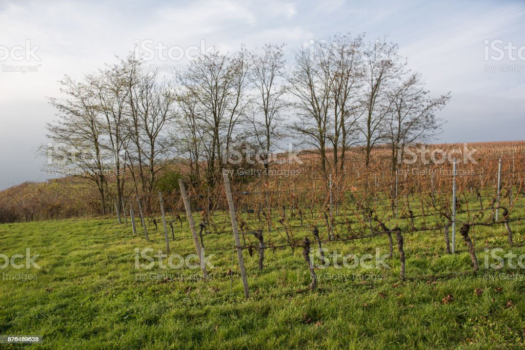 vine yards in south west germany at autumn stock photo