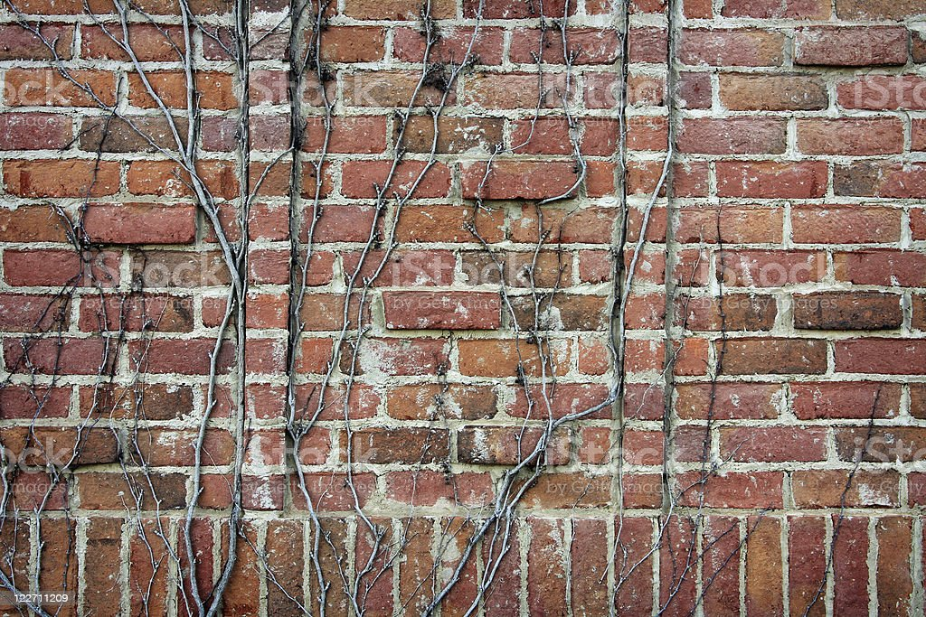 Vine-covered brick wall royalty-free stock photo