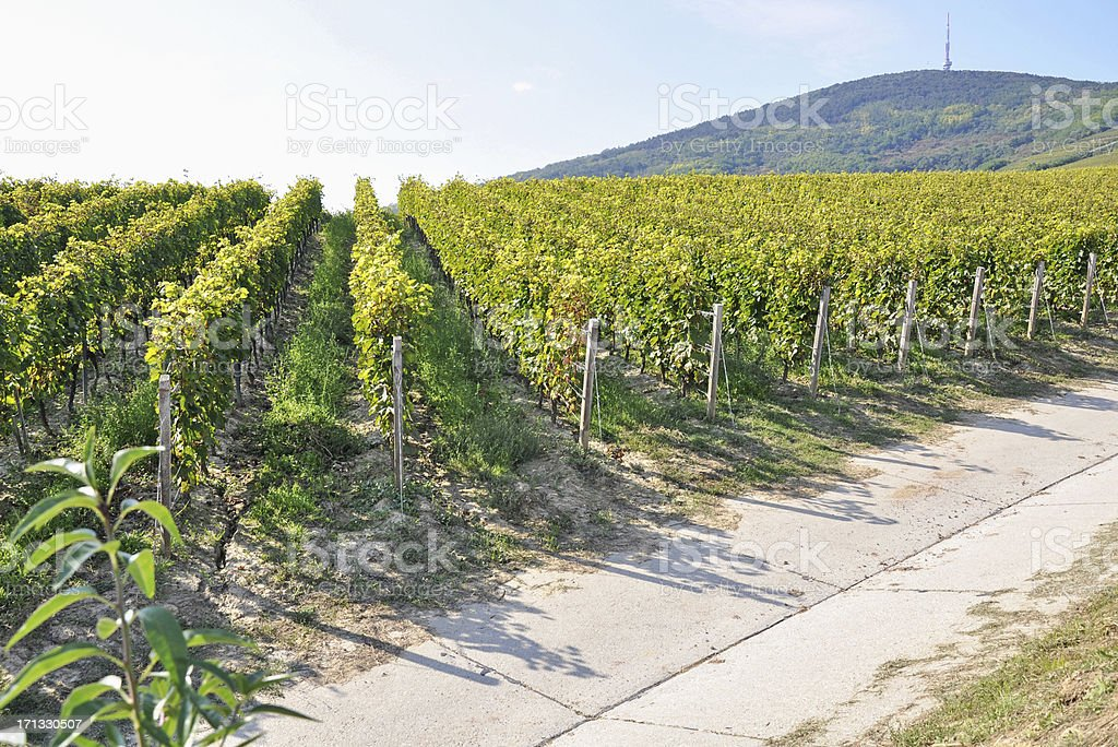 vinery stock photo