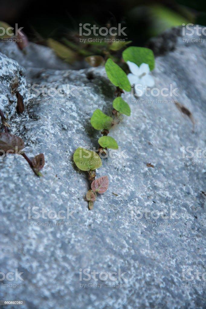 Vines, creepers, the origin of life stock photo