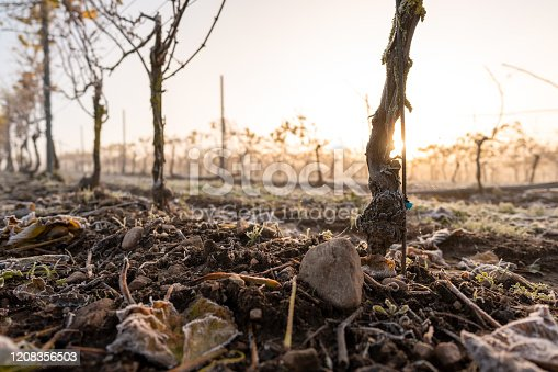 Sunrise at a vineyard in Sweden on a cold but sunny morning.