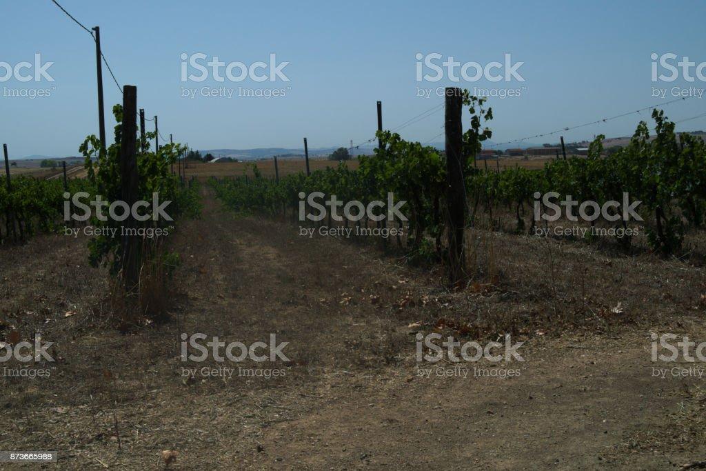 vines Mediterranean countryside stock photo
