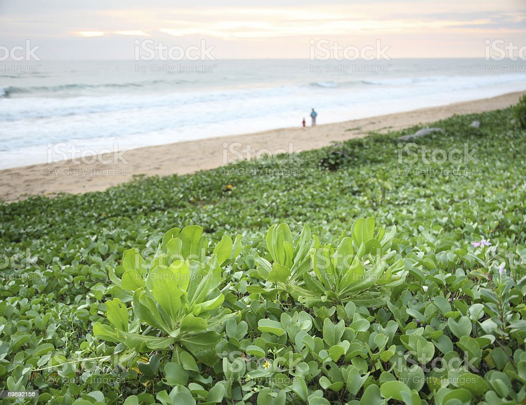 Vines On Beach royalty-free stock photo
