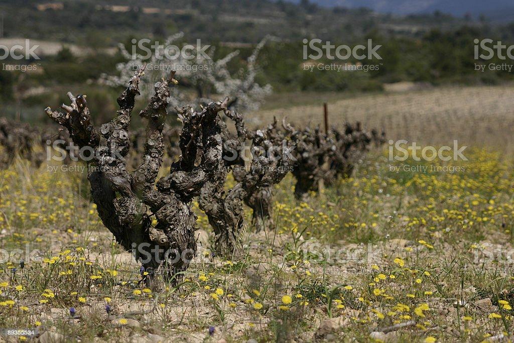 Vines royaltyfri bildbanksbilder