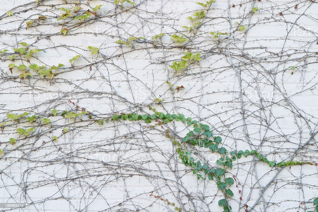 Vines Texture - Horizontal royalty-free stock photo