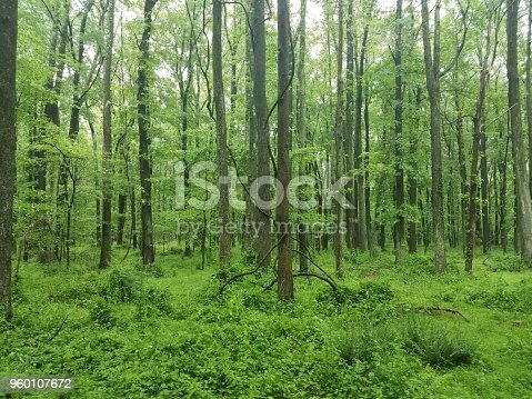 vines wrapped around a tree in the woods or forest