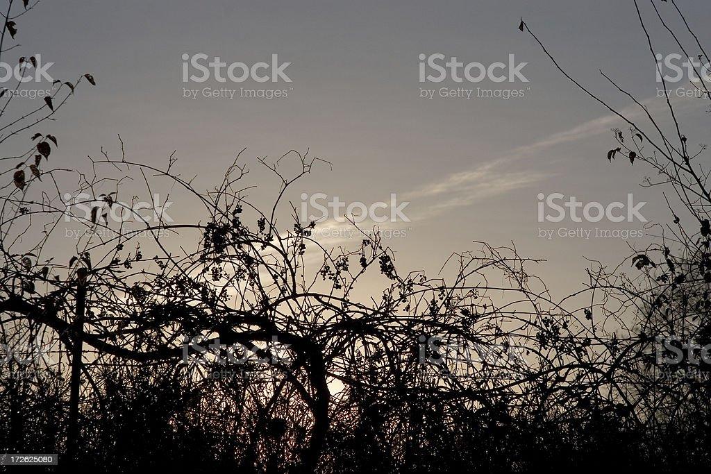viney overgrowth stock photo