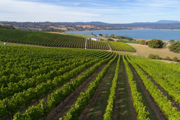 vineyard, aerial view, tasmania - tasmania stock photos and pictures
