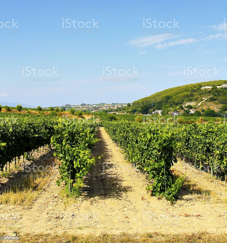 Vineyard alley royalty-free stock photo