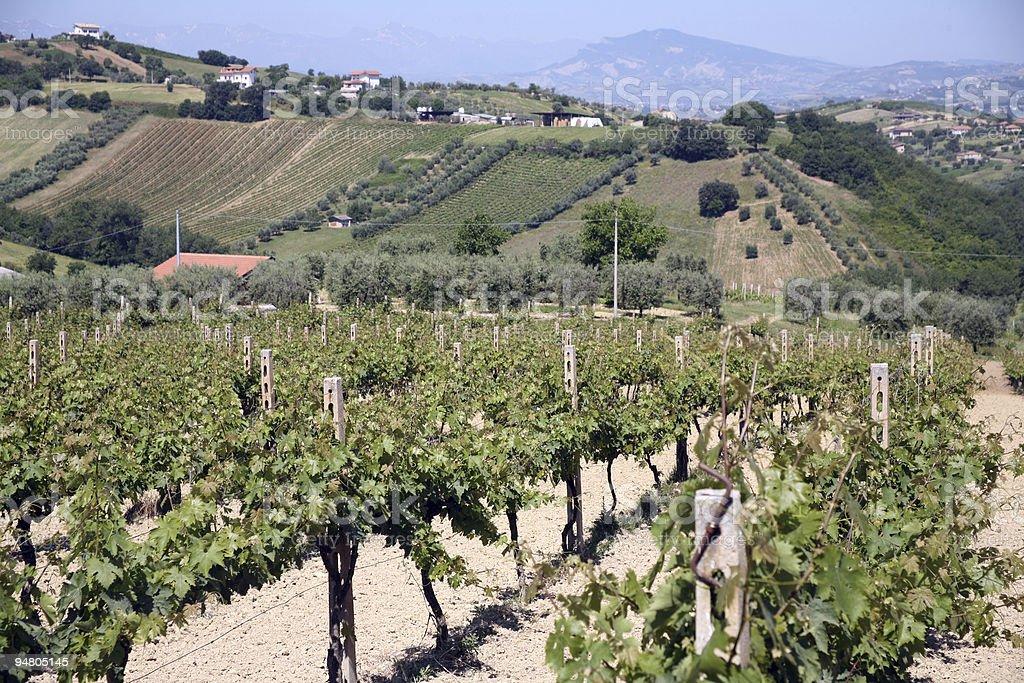vineyard among the hills royalty-free stock photo