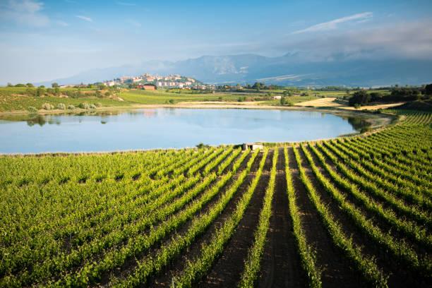Vineyard and Carralogrono lake with Laguardia town as background, Rioja Alavesa, Spain stock photo