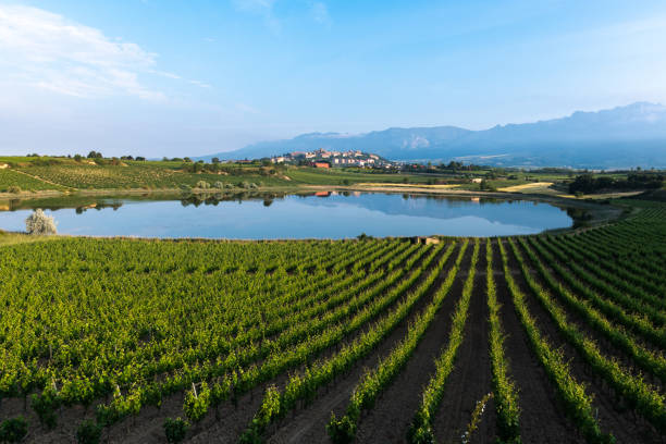 Vineyard and Carralogroño lake with Laguardia town as background, Rioja Alavesa, Spain stock photo