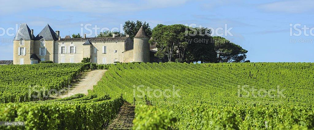 ブドウ園、シャトー d'Yquem 、ソーテルヌ地域、アキテーヌ、フラン - つる草のロイヤリティフリーストックフォト